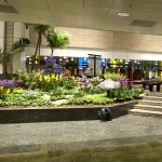 7 Things to Do in Singapore Airport